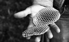 (Max Miedinger) Tags: blackandwhite bw 50mm blackwhite nikon tmax gates films bees 7 bn bee iso dev e 400 orwell epson sw f3 pk nikkor 13 six developed bianco nero api ai biancoenero apicoltura v700