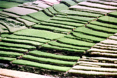 26-085 (ndpa / s. lundeen, archivist) Tags: bali color film field rural 35mm indonesia landscape countryside 26 nick terraces southpacific fields ricepaddies 1970s hillside 1972 indonesian balinese dewolf oceania pacificislands terraced nickdewolf photographbynickdewolf terracedhillside terracedfarmland reel26 terracedcountryside