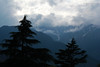 I'm not afraid of storms. I fear the mountains that halt their march. (TheSilhouette) Tags: trees sky cloud storm mountains love rain landscape overcast manali manal