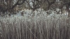 Winter_28 (losing.today) Tags: nature oregon outdoors pacificnorthwest portland pdx portlandor portlandoregon cold coldseason winter trees