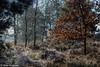 161230_006-305.jpg (Jacky Vastmans) Tags: limburg maasmechelen mechelseheide beriezen bevroren bos cold freezing frozen koud landscape landschap panorama sneeuw sneeuwlandschap snow snowy stilleven vriezen winter winterlandschap wood