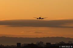 Itami Sky Park 2017.1.1 (10) JA810A / ANA's B787-8 (double-h) Tags: eos6d ef300mmf28lisiiusm rjoo itm osakaairport itamiairport 大阪空港 伊丹空港 airplane 飛行機 伊丹スカイパーク itamiskypark ja810a ana 全日空 b787 b7878 dreamliner