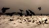 (Kijkdan) Tags: landscape crow birds kralingsebos kralingen fuji rotterdam xpro2 16mm 16f14