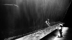 recountre (pix-4-2-day) Tags: oceanopolis water wasser aquarium child boy kind junge kleinkind window glass fenster robbe seehund seal blackandwhite monochrome schwarzweis spiegelung reflection light licht dunkel dark brest france frtankreich bretagne brittany pix42day