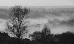 Winter valley mist (Hammerhead27) Tags: blackdownhills landscape hills fields tree uk blackandwhite monochrome bw outdoors fog mist valley nature winter somerset