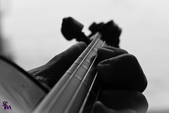 How to play the violin? (4inthehouse) Tags: odc bw beginner fingers strings tape violin