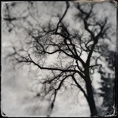 Whisperia (Creepella Gruesome) Tags: iphone6splus hipstamatic nature winter tree branches gnarled silhouette squareformat blackandwhite blur spooky ghostly phantasm