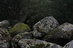 Musgo (clara.duenas) Tags: bosque montaña rocas musgo naturaleza españa