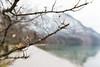 DSC_5166 (Peeraphotography) Tags: nikon sigma sigmalens germany bavaria berchtesgaden königssee outdoor nature mountain lake