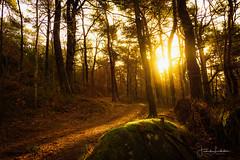 W A K E   U P (Fredrik Lindedal) Tags: forest path sun sunlight glow moss leafs light shadows iamnikon fredriklindedalse colors tree harmony mindfulness