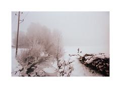 Dog walker (cardijo) Tags: austria österreich salzburg landscape landschaft winter snow schnee eis ice dog hund canon f1 fd 20mm kodak portra160 analog film