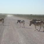 Zebraherde im Etoscha Nationalpark