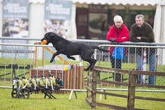 Kent_County_Show_2014_Highlights_016
