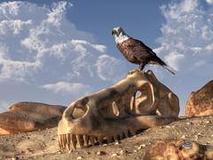 Eagle Rex (deskridge) Tags: bird fossil skull dinosaur eagle baldeagle extinct trex tyrannosaurus tyrannosaur eskridge dinosaurskull paleoart apexpredator danieleskridge eaglerex