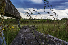 Taking a pause (Roel Bloemen) Tags: wood nature bench wooden rust over bank gras taking hout houten bankje groei opoeteren dilsen begroeid overgroeien driepaal