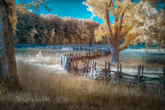 Fence Line (shutterclick3x) Tags: landscape ir meadow infrared earlymorninglight fauxcolor frankloose