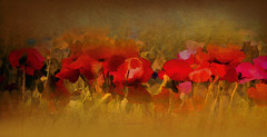 Le jardin de Flora (Flora's garden) (patrice ouellet) Tags: impressionism impressionisme floragarden patricephotographiste lejardindeflora