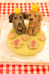 Your dog figure cake (INUGOHAN_WORLD) Tags: food dog art cooking dogs cake recipe healthy papillon poodle foodart toypoodle dogcake cakeclass dogsweets dogrecipe figurecake dogrecipes