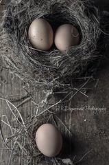 3 eggs (nest and floor) (R.Diepenheim Photography) Tags: stilllife food nikon nest egg shell messy eggs hen styling