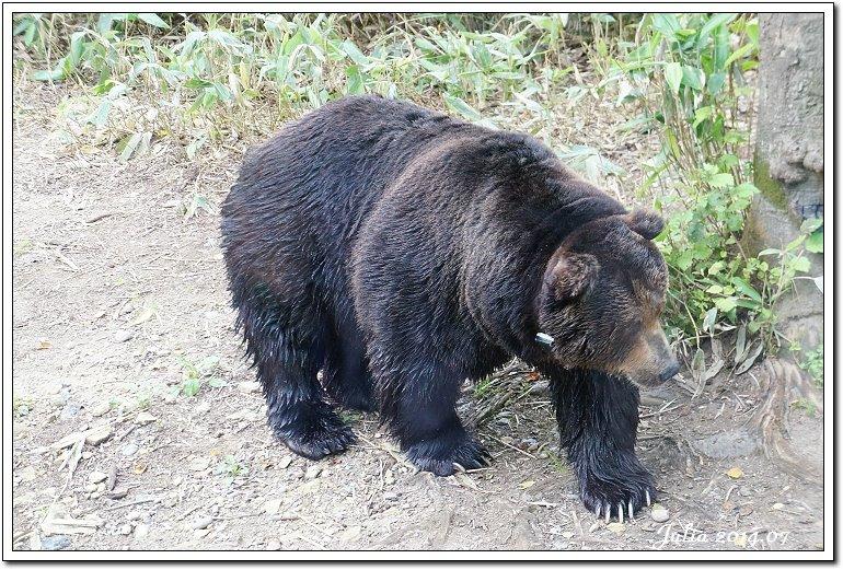 熊牧場 (18)