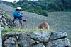 Peru-0710.jpg (Matt and Debbie) Tags: peru llama 2015 wayna winaywayna wiñay