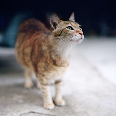 cats in the city (Steve only) Tags: zenza bronica s2a ブロニカ zenzanon mc 8024 80mm f24 lomography color negative 400 6x6 120 film mediumformat epson gtx970 v750 snaps city cats thecatwhoturnedonandoff littledoglaughedstories lomo
