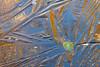 Abstrait d'hiver (Corinne Queme) Tags: abstrait glace reflet feuille mare forêtdefontainebleau mareauxfées hiver gel orange bleu