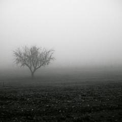 Uno (Jordi Carrión Rodríguez) Tags: árbol soledad lonely niebla campo