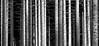 Fichtenwald (frankhurkuck) Tags: baum bäume fichte wald wälder schwarz weis landschaft natur holz stamm baumstämme harz mittelgebirge rabenklippe badharzburg tree trees forest wood blackwhite schwarzweis forests silber silver white black spruce