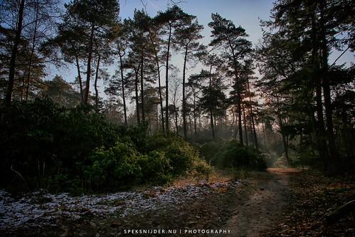 Birkhoven en Bokkeduinen