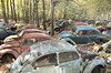 VW Graveyard (Jonnie Lynn Lace) Tags: abandoned abandonedamerica abandonedpa pennsylvania decay decayed peelingpaint paintchips rust abandonedcar car vw volkswagen vacant nature woods blue red yellow orange teal green fall fallleaves leaves colours nikkor nikon 24mm d750 vehicle white dark light sunlight autumn tree trees window windows door doors old natural contrast natur leaf colorful outdoors exterior america american day flickr urbex naturetakesover vwgraveyard junkyard