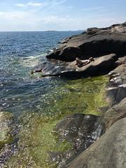 Femöre 25 juni 2016 (gustafsson_jan) Tags: femöre natur nature oxelösund hav östersjön balticsea klippor cliffs