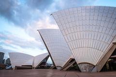 Sydney Opera House (Michael Torii) Tags: sydney operahouse nsw australia シドニー オペラハウス オーストラリア nikon d750