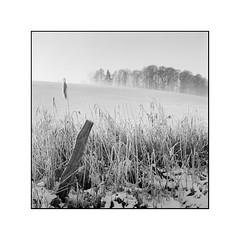 Winter days (cardijo) Tags: austria österreich salzburg landscape landschaft frost snow schnee schwarzweis sw blackandwhite bw analog film fp4 rodinal rolleiflex tessar carlzeiss tree winter nikon coolscan
