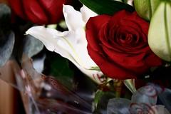 Rosa (vir.blanco) Tags: rosa rose flowers flower flores flor color colors colores red rojo white blanco ramo bouquet naturaleza nature green verde