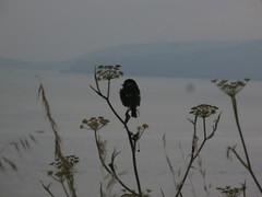 P7030334 (jesust793) Tags: pájaros birds flores