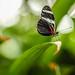 @ Butterfly Park, Houston