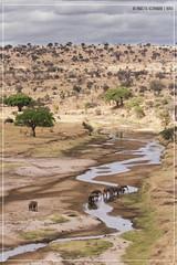 "Big Elephants <a style=""margin-left:10px; font-size:0.8em;"" href=""http://www.flickr.com/photos/66444177@N04/18499248979/"" target=""_blank"">@flickr</a>"