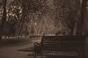 TiempodeEspera (edalgomezn78) Tags: chile park city parque autumn trees santiago urban tree art film nature sepia vintage photography photo nikon photos otoño invierno d7000