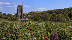 St Michael and All Angels,Stokenham (yadrad) Tags: southwest church meadow devon kingsbridge southhams stmichaelandallangels widflowers thewestcountry stokenham canon5dmk2