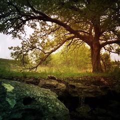 The Hidden Spring (Wayne Greer) Tags: trees kansas springwater mobilephotography iphone6 waynegreer