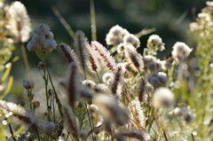 Light and shadow (dfromonteil) Tags: grass herbe vegetal nature lumière ombre shadow macro bokeh droplets gouttes