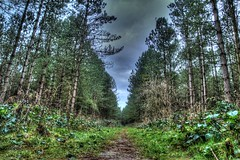 Daneshill Nature Reserve (Andrew Kettell) Tags: trees hdr woods outdoor