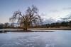 Frozen Weeping Willow (Jannik Peters) Tags: weeping willow garden lake sea tree beautiful cold frozen sky blue magic