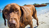 IMG_1962 (megscapturedtreasures) Tags: ammo sun sunset dog beach dogs ruff days daycare