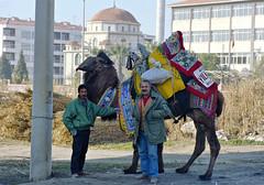 Camel in Aydin (scottwin01) Tags: izmir aydin 1990