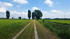 Via Francigena - Mortara - Garlasco