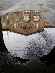 2017-01-06_10-28-05 (marinarafaelian) Tags: reflection city yerevan windows bildings puddle trees