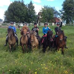 IMG-20160706-WA0035 (neeltjevanderweide) Tags: iceland horse ishestar goldencircle horsebackriding icelandichorse 2016