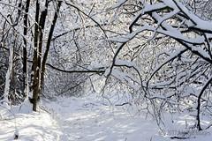 Winter's Beauty (A.Joseph Images) Tags: winter snow snowtrails d7200 nikkor70200f28 landscape hiver